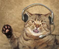 Bilder von Katze Kopfhörer Mikrofon Lustige Kreativ Tiere
