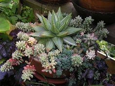 A simply beautiful succulent container pot......Love succulents, they're so stunning!!
