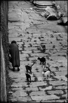Elliot Erwitt. Pantheon 1955 Rome.....I truly believe that the cat ladies of the world are some of our greatest unsung heroines!