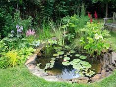 From small containers to extravagant ponds, check out these lush hydro gardens. Water Garden Plants, Ponds For Small Gardens, Fish Pond Gardens, Indoor Water Garden, Backyard Water Feature, Ponds Backyard, Hydro Gardens, Backyard Waterfalls, Koi Ponds