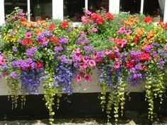 Paint window boxes black/hang on house. Love these flowers annual flowers for window boxes