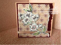 Petal Pink Forever Blossoms Cherry Blossom Images, Cherry Cobbler, Unique Cards, Butterfly Flowers, Flower Cards, Beautiful Images, Blossoms, Parisian, Favorite Color