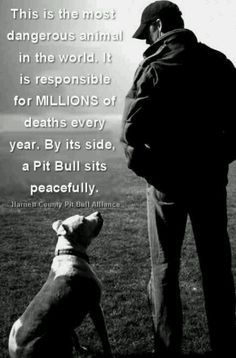 This is the most dangerous animal in the world. It is responsible for MILLIONS of deaths every year. By its side sits a Pit Bull peacefully.