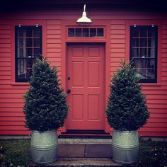 Christmas Trees in Galvanized Metal Garden Containers