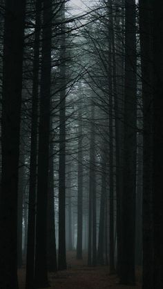 The latest iPhone11, iPhone11 Pro, iPhone 11 Pro Max mobile phone HD wallpapers free download, forest, fog, trees, dusk, nature - Free Wallpaper | Download Free Wallpapers
