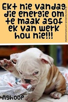 Afrikaans Funny Qoutes, Cute Quotes, Words Quotes, Funny Memes, Jokes, Good Morning Prayer, Good Morning Good Night, I Hate Mondays, Messages For Friends