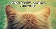 What cute fluffy animal you are? Take the test to find out!