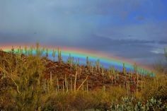 Rainbow - Sonoran Desert, Tucson, Arizona