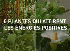 """Une sélection de plantes """"Feng Shui"""" à avoir chez soi pour purifier l'air…"""
