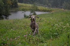 Gårdstunet Hundepensjonat: Okei da...så finnes det dårlig vær.. :-) Nå er hun...