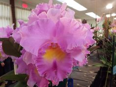 Displays at the 2015 Peninsula Orchid Society Show & Sale, Redwood City, CA. January 24th and 25th.