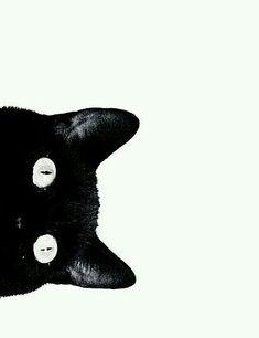Gatos - Wallpaper