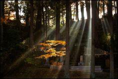 Takayama Takayama, Professional Photographer, Photographers, Japan, My Favorite Things, Plants, Image, Beauty, Beleza
