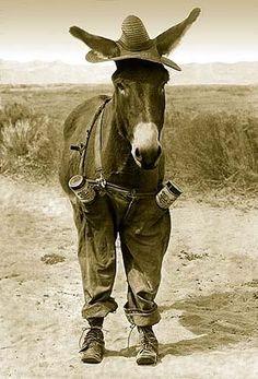 happy valentine horse