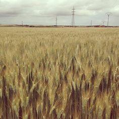 Fields by Marina Molares