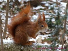 Squirrel 47 by Cundrie-la-Surziere.deviantart.com on @deviantART