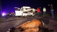 Fallece atropellada en Vilalba una joven de 24 años que iba a caballo junto a otros jinetes.  https://www.facebook.com/forohorses