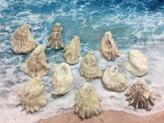 SUPPLY: 15 Naturally White Oyster Shells/ Rustic Oyster Shells For Crafts or Jewelry.{F2-199#00639} by BuyAFairytale on Etsy