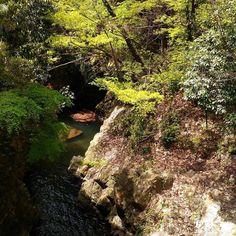 緑が濃くなってきました いい気候です  オープンします  #箕面 #日本茶 #CHAnoMA #Minoo #Matcha #日本酒 #抹茶 #煎茶 #箕面ビール #古本#ブックカフェ#ひなたブック