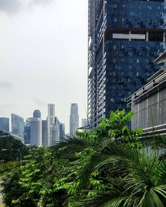 #grossstadtdschungel    #singapore #sin #sincity #cabincrew #crewlife #airhostess #cityofdream #skyscraper #asia #bigcitylife #afterwork #greenandthecity #flyswiss #foreveronvacation #travel #traveling #wanderlust #mytinyatlas #photooftheday #travelling #architecture #timeoutsingapore #instapassport #instatraveling #igtravel #swissbloggers #bloggerschweiz #blogger_ch #reisen