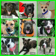 THE KILL LIST FOR THURSDAY 10-6-16SHARE NOW & SAVE A LIFE ALL DOGS AVAILABLE @NYCDOGS.URGENTPODR.ORG