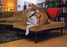 diy MCM dog bed seen in Atomic Ranch magazine