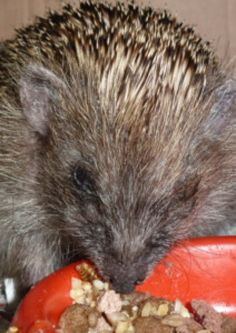 Wildlife needs help to survive wet summer says animal charity.