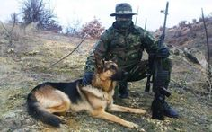 Supposedly a Serbian sniper with a German shepherd. Rifle is the Zastava which is more of an enlarged AK using the Mauser cartridge. The is slowly being replaced by the which is chambered in (GRH) German Shepherd Wallpaper, Animal Heros, German Shepherd Dogs, German Shepherds, Search And Rescue Dogs, Military Working Dogs, Schaefer, War Dogs, Man And Dog