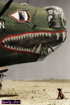 B 24 Liberator with Shark Mouth in Italy 15th Air Force 1944