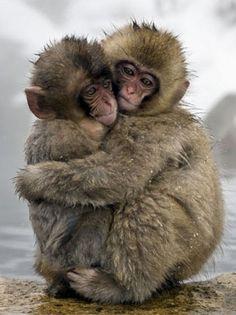 16 Best monkeys images | Animals friends, Animal photo ...