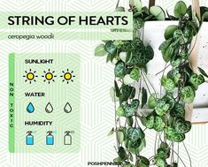 The Best 9 Indoor Hanging Plants Even A Beginner Won't Kill | Posh Pennies