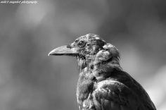 Owl, Bird, Photography, Animals, Animales, Animaux, Owls, Photograph, Birds