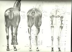 The above drawings show three representations of the rear view of the horse. Description from art2art.org.uk. I searched for this on bing.com/images