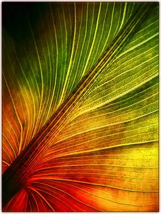 ~~Textured Leaf Macro by Dave Linscheid~~