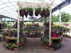 Hanging baskets displayed on a pergola at Dunbar Garden Centre. Hanging baskets displayed on a pergo Balcony Hanging Plants, Hanging Basket Garden, Hanging Baskets, Garden Power Tools, Garden Tool Shed, Garden Tool Storage, Garden Stand, Garden Shop, Garden Nursery