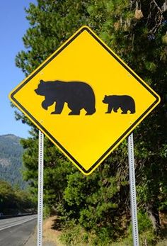 Bear Crossing Sign in the Smoky Mountains