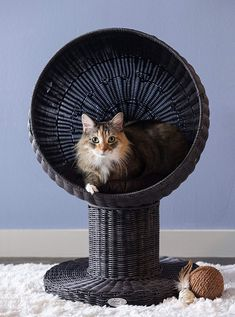 The Refined Feline's Kitty Ball Cat Bed: Let your cat lounge in style. The Kitty Ball Bed gives your cat a large comfortable bed that's off the ground but easy to get into. Sisal, Animal Gato, Unique Cats, Cat Supplies, Cat Furniture, Litter Box, Pet Beds, Cats And Kittens, Cats Meowing