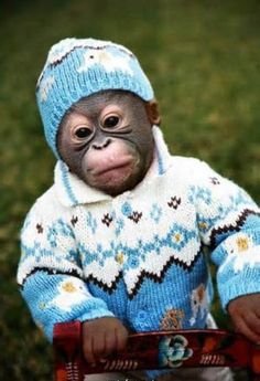 Monkey wearing a hat and sweater.