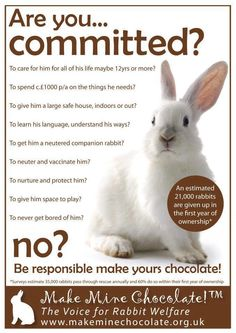 Not a happy easter bunny stop animals abuse rescue animals live rabbits are not easter gifts they are a year commitment negle Choice Image