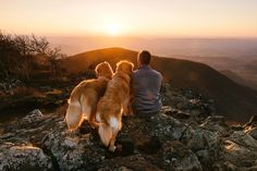 Here are 10 dog friendly hikes in Virginia, parks and trails where you can get your dog out of the house and back to nature.