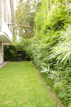 i like the lush yet simpleness of the bamboo. there are a few varieties that grow here but i don't have any experience with them. Bamboo Garden, Diy Garden, Balcony Garden, Dream Garden, Large Backyard Landscaping, Landscaping Tips, Garden Angels, Young House Love, Patio Plants