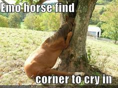 Emo horse find  corner to cry in