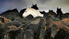 Freya werd in 2006 met ruim 200 andere paarden gered. Het witte paard werd bekend door een foto van Laurens Aaij.
