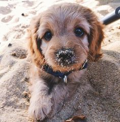 Today, we share 22 adorable cute puppies you'll have to see to believe. These cute puppies photos gives something cool feeling, you can't got from others. Animals And Pets, Baby Animals, Funny Animals, Wild Animals, Small Animals, Animals Images, Cute Creatures, I Love Dogs, Beagle