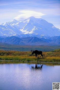 5. #Explore the Wilds of #Denali National #Park, Alaska - 50 #Ultimate #Travel #Bucket List Ideas ... → Travel #Destinations
