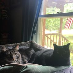 Sweet Milo and Ty are loving their new comfy bed in the window!!