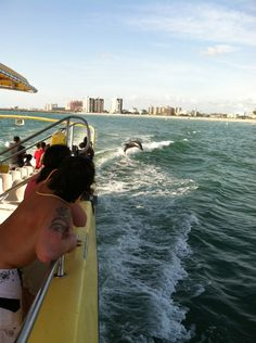 My son watching dolphins jump behind a speed boat tour, Clearwater beach fla.
