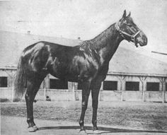 Black Gold, 1924 Kentucky Derby winner.  Children's author Marguerite Henry wrote a fictionalized account of the horse's life.