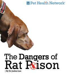The dangers of rat poison to dogs and cats via @Pet Health Network