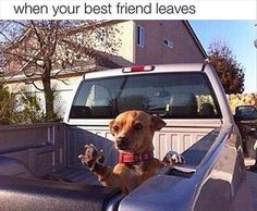 Funny Animal Pictures Of The Day - 27 Pics